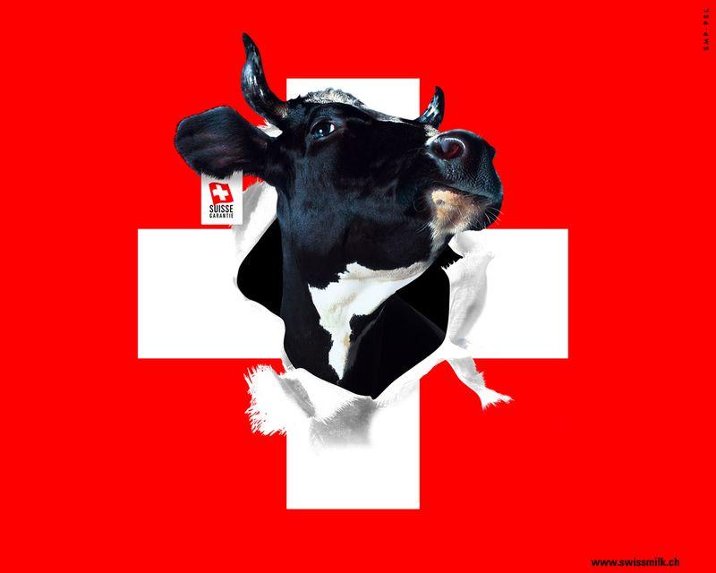 Drapeau-suisse vache